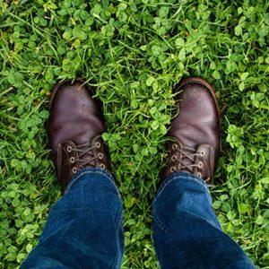 clover grass lawn